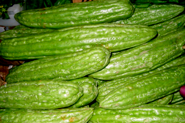 Ampalaya For Non-Insulin Dependent Diabetes