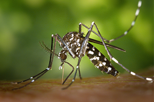 Anti-Dengue Virus Preparations
